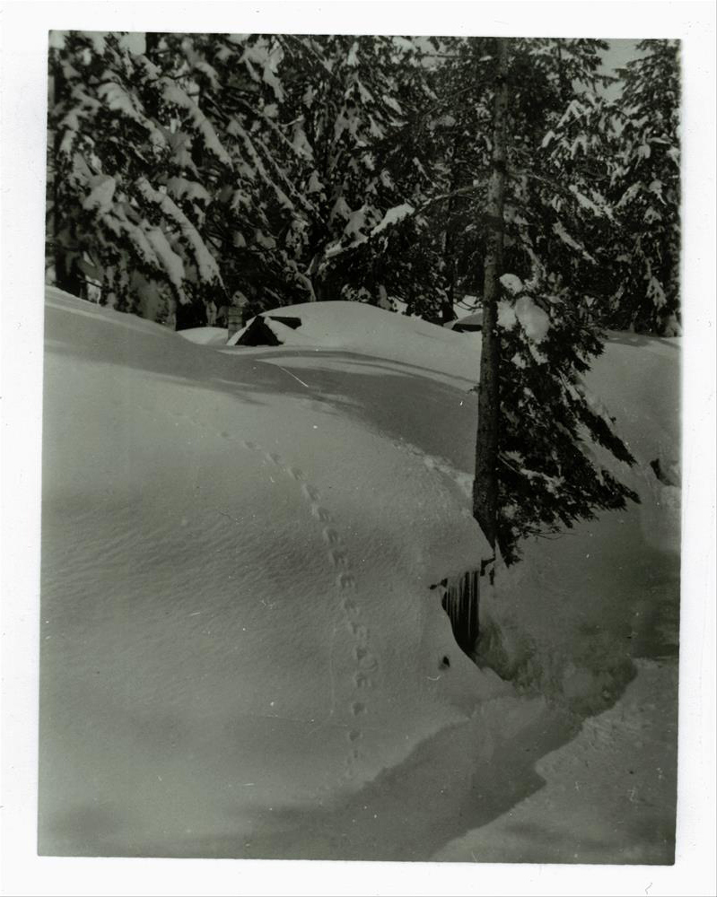 Buildings 30, 31, and 32 in Crater Lake NP (date unknown) Guy Hartell