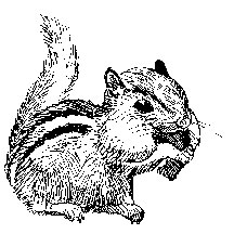 Chipmunk with a mouthfull