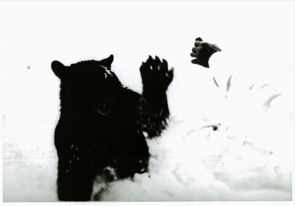 Close up of man feeding bear on a snow bank in Crater Lake NP, circa 1931-1932 Arthur Holmes stamped on back