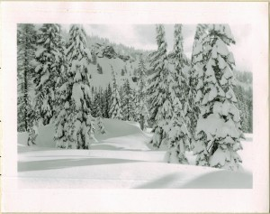 Forest under snow in Crater Lake NP (date unknown) 2