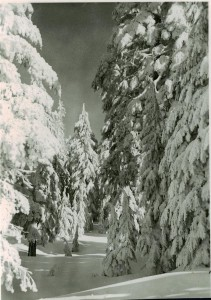 Forest under snow in Crater Lake NP (date unknown)