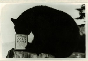 Bears - It is good to this day = in Crater Lake NP, circa 1931