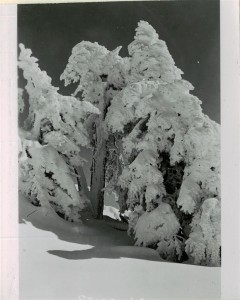 Snow scene, trees in Crater Lake NP (date unknown)