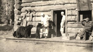 Three bears being fed by a member of the kitchen staff, another kitchen staffer in doorway of log structure, William G. Steel sitting looking on.