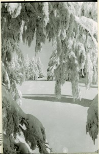 Winter Scene in Crater Lake NP, 1931